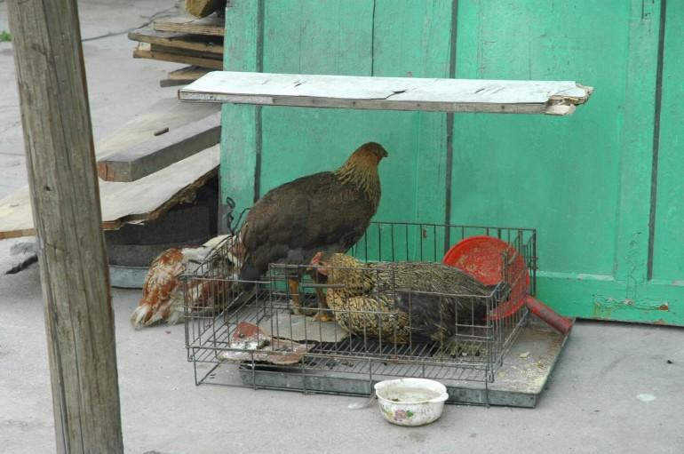 http://cernicky.com/wp-content/uploads/Čína-508_web-770x511.jpg